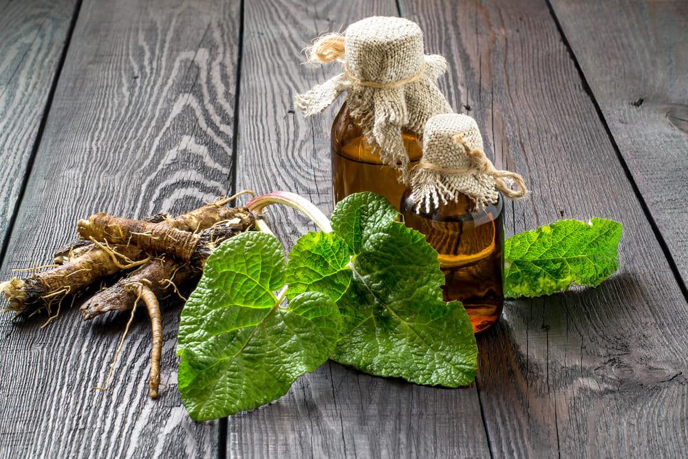 Домашние маски для волос с репейным маслом